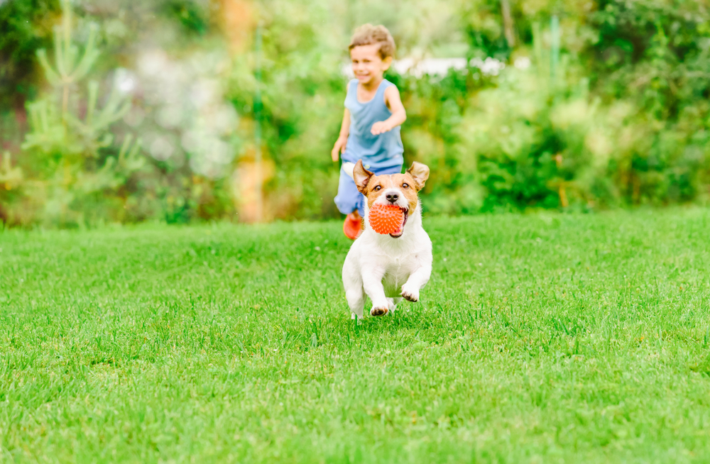 dog and child playing outdoor