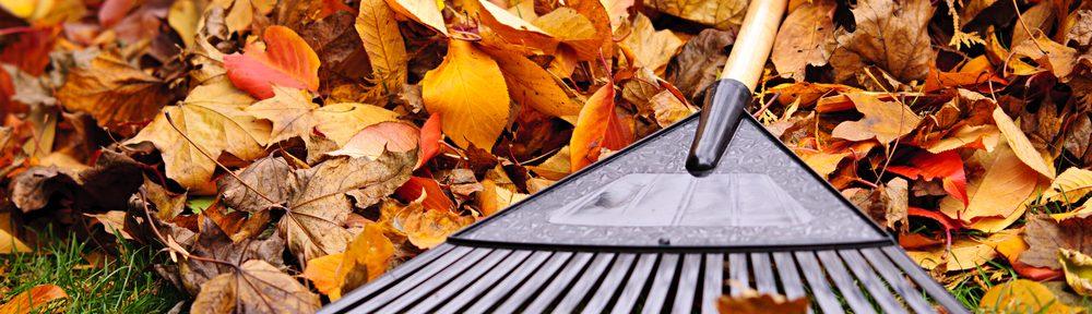 yard rake and leaves